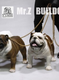 MR.Z BRITISH BULLDOG 英國鬥牛犬-01