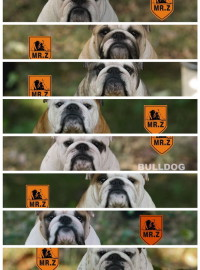 MR.Z 1.4 BRITISH BULLDOG 英國鬥牛犬-0