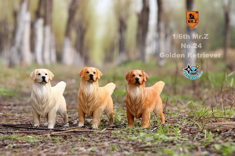 MR.Z MRZ024 GOLDEN RETRIEVER 黃金獵犬-01