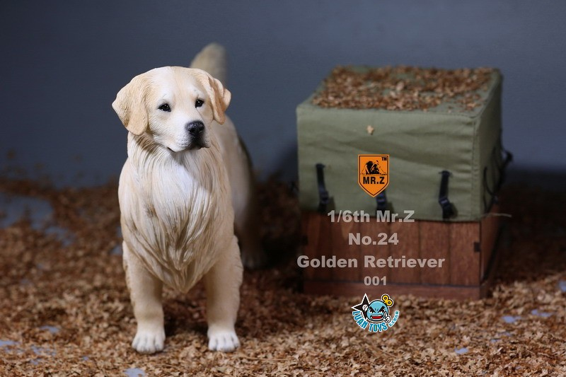 MR.Z MRZ024 GOLDEN RETRIEVER 黃金獵犬-03