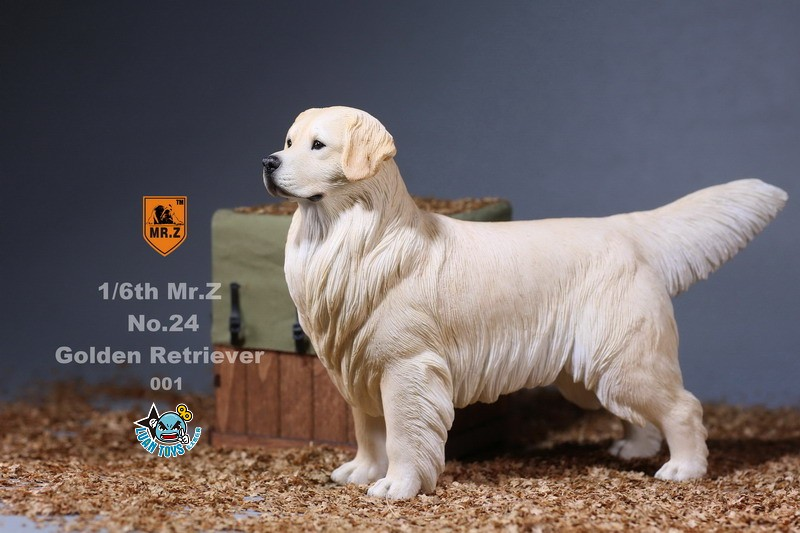 MR.Z MRZ024 GOLDEN RETRIEVER 黃金獵犬-04