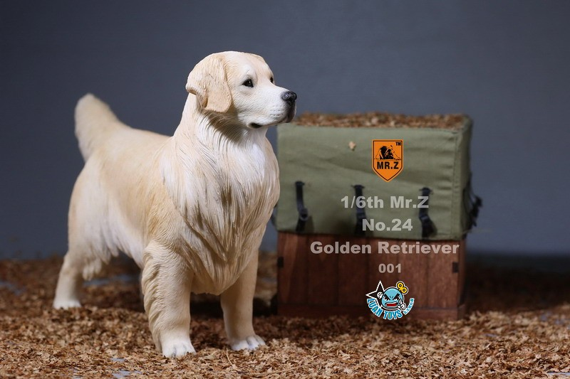MR.Z MRZ024 GOLDEN RETRIEVER 黃金獵犬-05