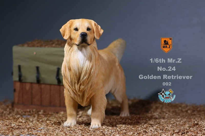MR.Z MRZ024 GOLDEN RETRIEVER 黃金獵犬-06