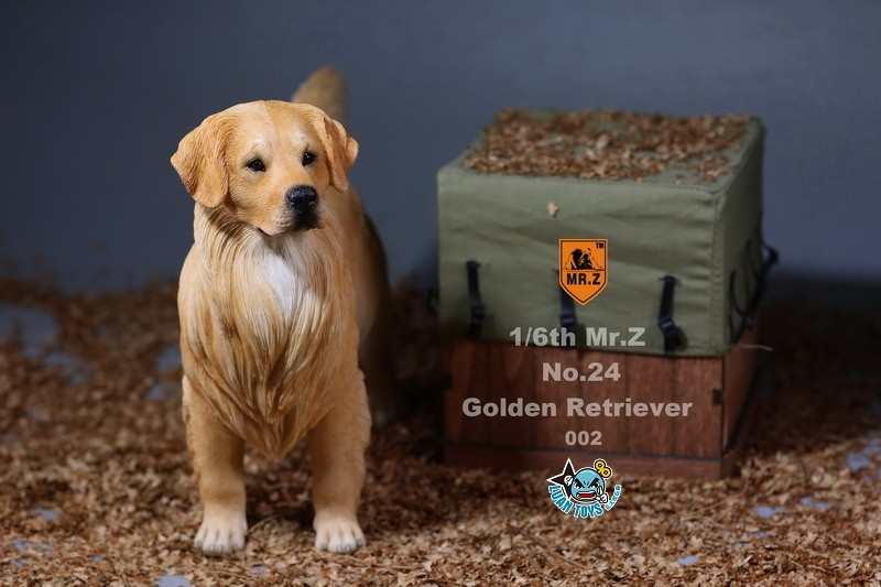 MR.Z MRZ024 GOLDEN RETRIEVER 黃金獵犬-07