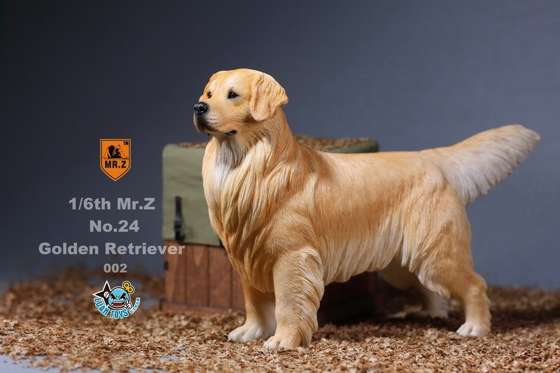 MR.Z MRZ024 GOLDEN RETRIEVER 黃金獵犬-08