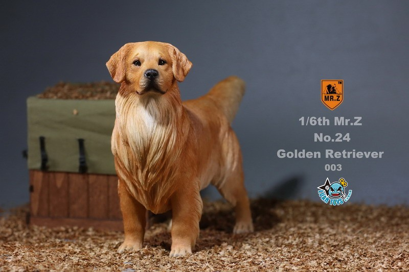 MR.Z MRZ024 GOLDEN RETRIEVER 黃金獵犬-10