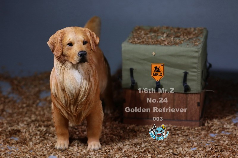 MR.Z MRZ024 GOLDEN RETRIEVER 黃金獵犬-11