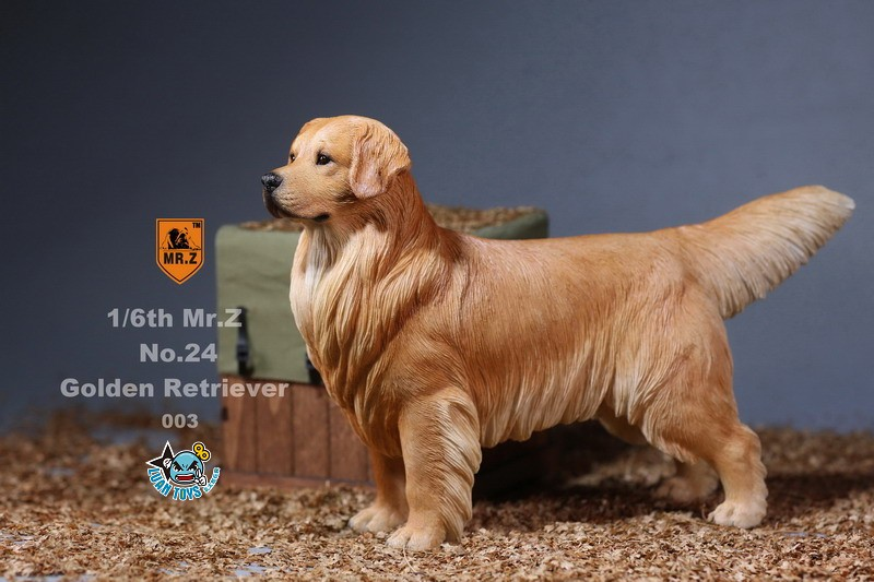 MR.Z MRZ024 GOLDEN RETRIEVER 黃金獵犬-12
