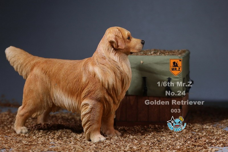 MR.Z MRZ024 GOLDEN RETRIEVER 黃金獵犬-13