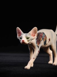 JXK Studio JXK026B CANADIAN HAIRLESS 加拿大無毛貓、SPHYNX 斯芬克斯貓-01